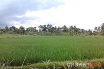  Tanah 10000 Meter di jalan palagan KM 10 Sleman Yogyakarta